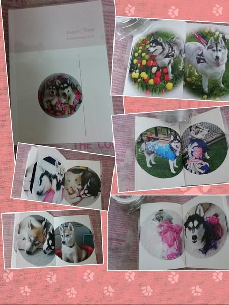 collage-1492246962631.jpg